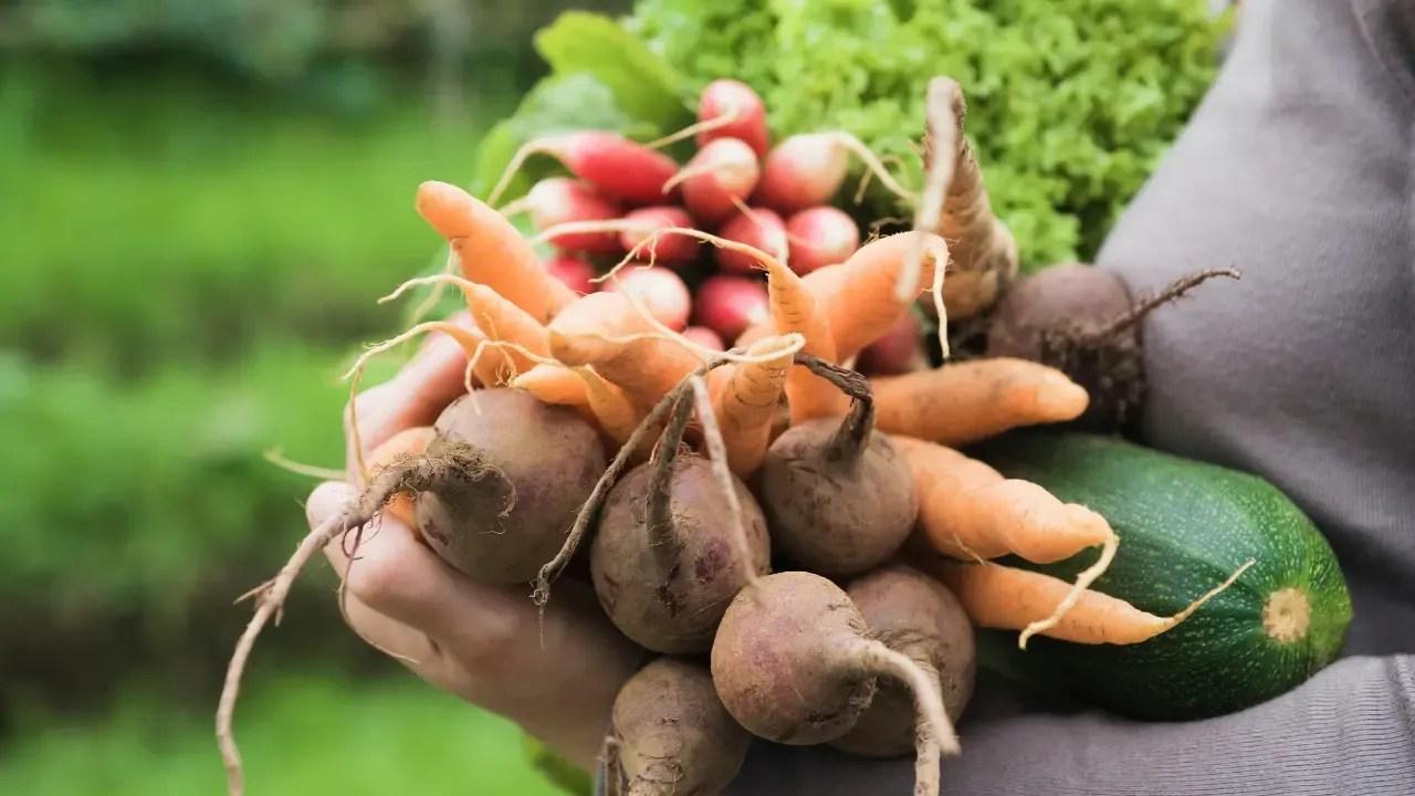 Comment entretenir son jardin pour avoir de bons fruits et légumes?